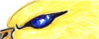 A just-because pic with amazing detail on the eye. Spectactular.